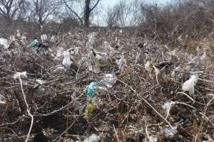 There is plastic everywhere in trees and wrapped around shrub limbs.